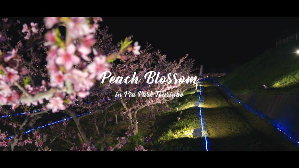 刈羽村様 桃の花ライトアップ